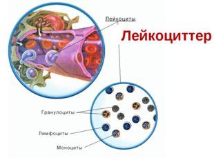 Лейкоциттер