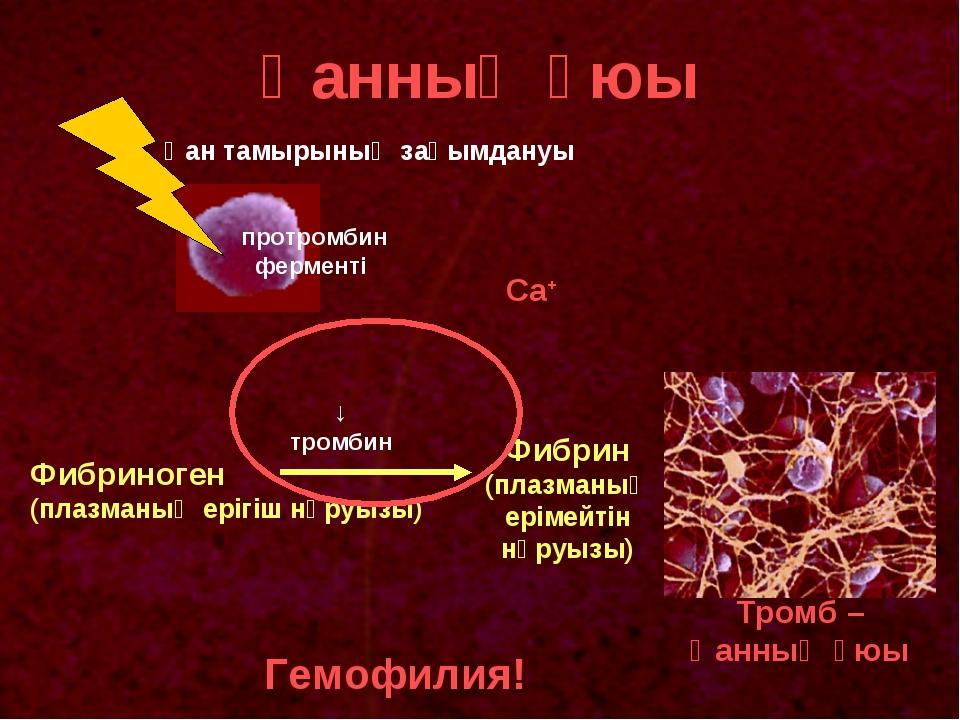 Қанның ұюы протромбин ферменті Фибриноген (плазманың ерігіш нәруызы) Фибрин (...