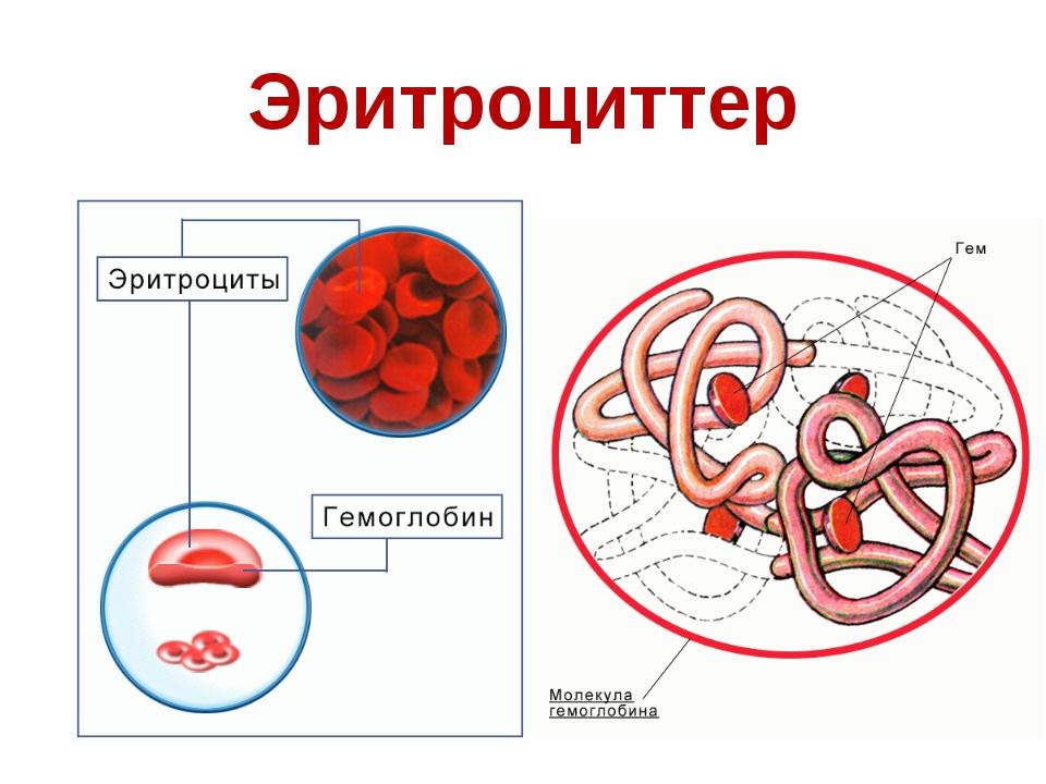 Эритроциттер