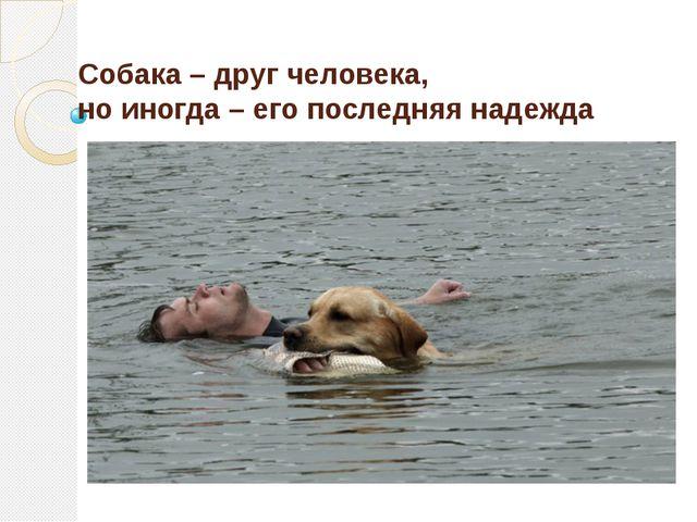 Собака – друг человека, но иногда – его последняя надежда