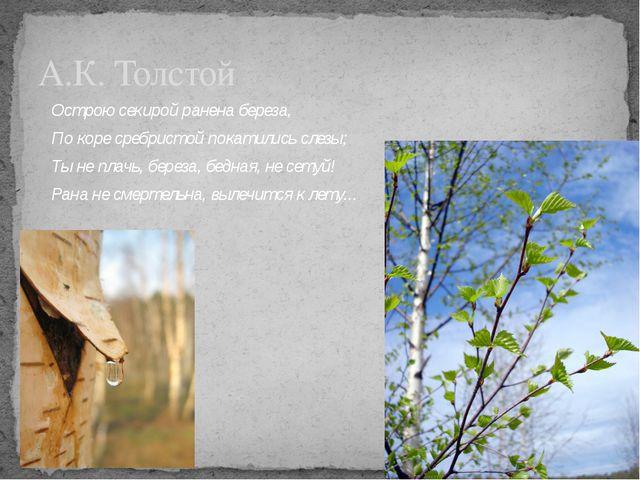 А.К. Толстой Острою секирой ранена береза, По коре сребристой покатились слез...