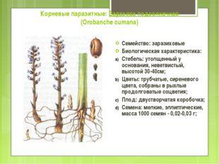 Корневые паразитные: Заразиха подсолнечная (Orobanche cumana) Семейство: зара