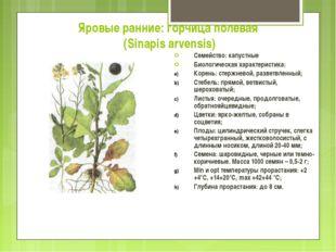Яровые ранние: горчица полевая (Sinapis arvensis) Семейство: капустные Биолог