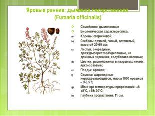 Яровые ранние: дымянка лекарственная (Fumaria officinalis) Семейство: дымянко