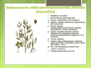 Яровые ранние: амброзия полыннолистная (Ambrosia artemisiifolia) Семейство: а