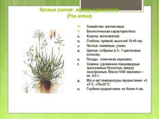 Яровые ранние: мятлик однолетний (Poa annua) Семейство: мятликовые Биологичес