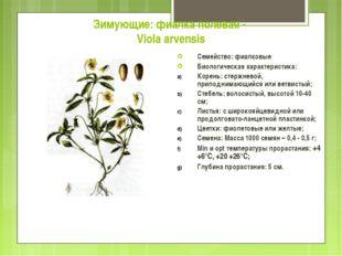 Зимующие: фиалка полевая - Viola arvensis Семейство: фиалковые Биологическая