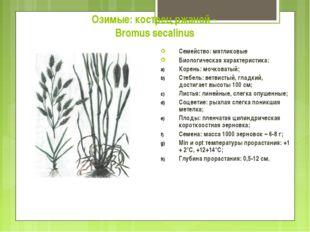 Озимые: кострец ржаной - Bromus secalinus Семейство: мятликовые Биологическая