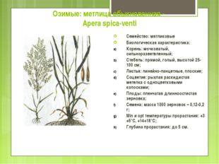 Озимые: метлица обыкновенная - Apera spica-venti Семейство: мятликовые Биолог