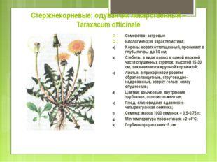 Стержнекорневые: одуванчик лекарственный – Taraxacum officinale Семейство: ас