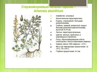 Стержнекорневые: полынь горькая – Artemisia absinthium Семейство: астровые Би