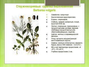 Стержнекорневые: сурепка обыкновенная Barbarea vulgaris Семейство: капустные