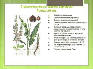 Стержнекорневые: щавель курчавый Rumex crispus Семейство: гречишные Биологиче