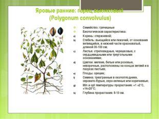 Яровые ранние: горец вьюнковый (Polygonum convolvulus) Семейство: гречишные Б