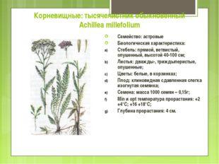 Корневищные: тысячелистник обыкновенный Achillea millefolium Семейство: астро
