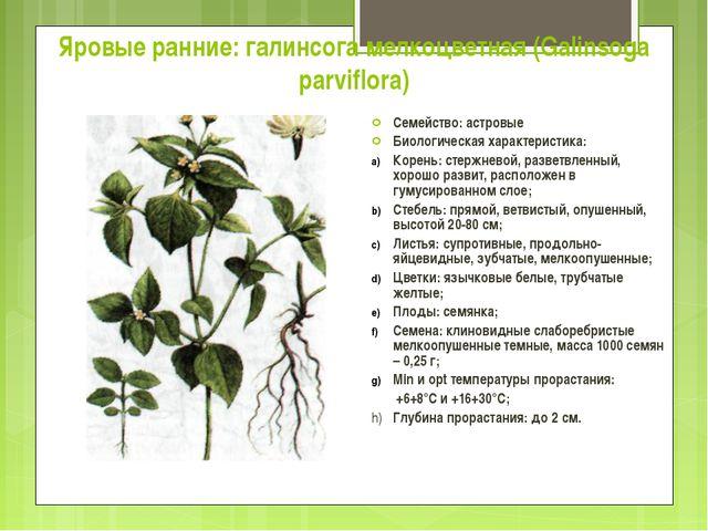 Яровые ранние: галинсога мелкоцветная (Galinsoga parviflora) Семейство: астро...