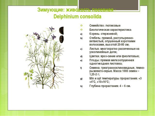 Зимующие: живокость посевная - Delphinium consolida Семейство: лютиковые Биол...
