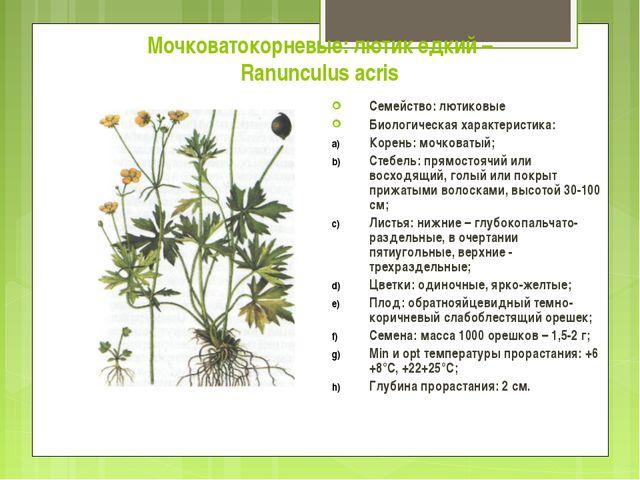 Мочковатокорневые: лютик едкий – Ranunculus acris Семейство: лютиковые Биолог...