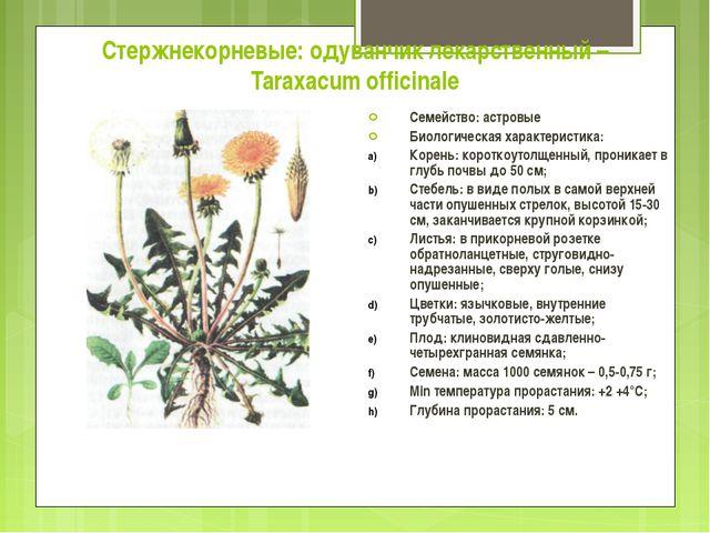 Стержнекорневые: одуванчик лекарственный – Taraxacum officinale Семейство: ас...