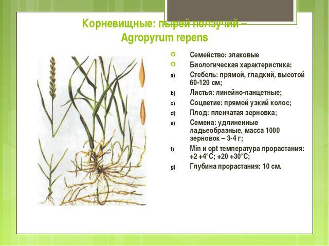 Корневищные: пырей ползучий – Agropyrum repens Семейство: злаковые Биологичес...