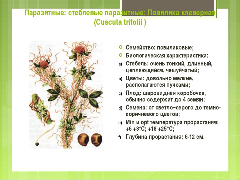 Паразитные: стеблевые паразитные: Повилика клеверная (Cuscuta trifolii ) Семе...