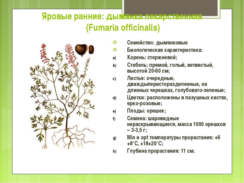 Яровые ранние: дымянка лекарственная (Fumaria officinalis) Семейство: дымянко...
