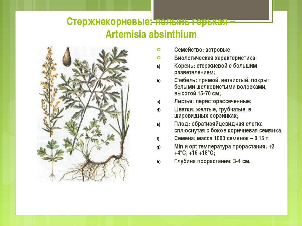 Стержнекорневые: полынь горькая – Artemisia absinthium Семейство: астровые Би...