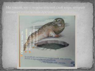 Мы узнали, что у тюленя толстый слой жира, который защищает его от холода Арк