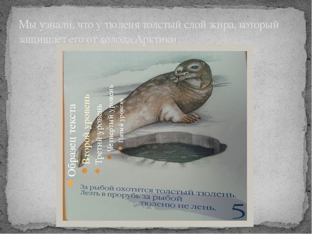 Мы узнали, что у тюленя толстый слой жира, который защищает его от холода Арк...