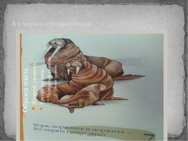 А у моржа огромные бивни!..