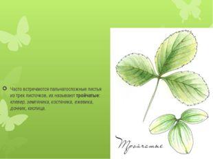 Часто встречаются пальчатосложные листья из трех листочков, их называюттрой