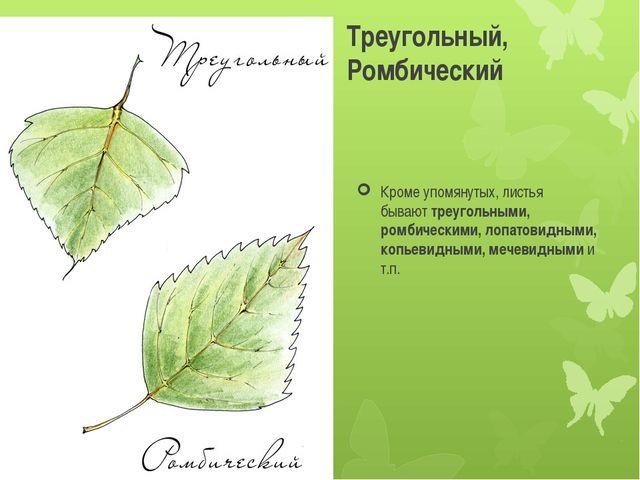Треугольный, Ромбический Кроме упомянутых, листья бываюттреугольными, ромбич...
