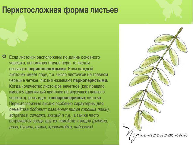 Перистосложная форма листьев Если листочки расположены по длине основного чер...