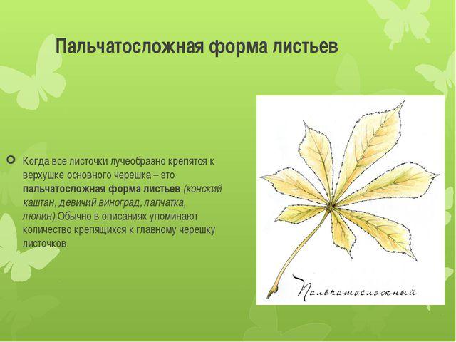 Пальчатосложная форма листьев Когда все листочки лучеобразно крепятся к верху...