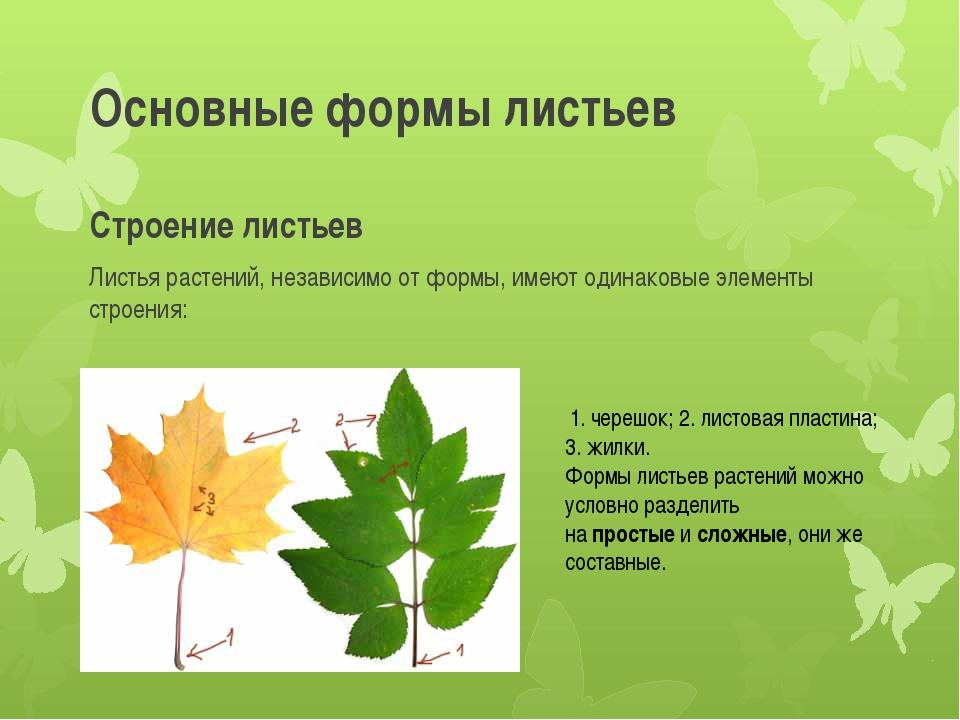 Основные формы листьев Строение листьев Листья растений, независимо от формы,...