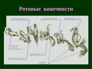 Ротовые конечности