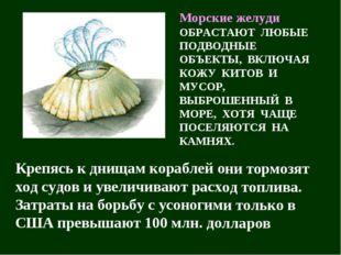 Морские желуди ОБРАСТАЮТ ЛЮБЫЕ ПОДВОДНЫЕ ОБЪЕКТЫ, ВКЛЮЧАЯ КОЖУ КИТОВ И МУСОР,