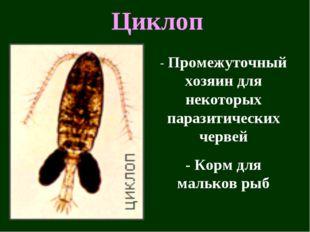 Циклоп - Промежуточный хозяин для некоторых паразитических червей - Корм для