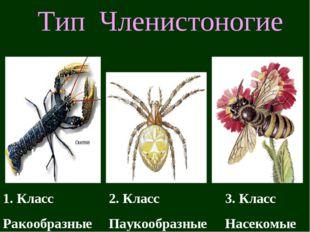 Тип Членистоногие 1. Класс Ракообразные 2. Класс Паукообразные 3. Класс Насек