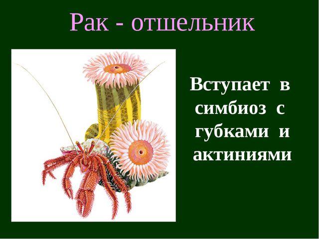 Рак - отшельник Вступает в симбиоз с губками и актиниями