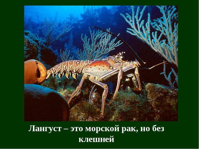 Лангуст – это морской рак, но без клешней