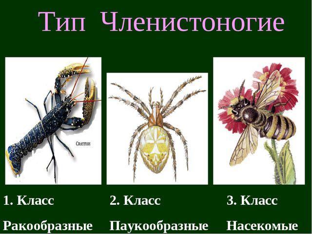 Тип Членистоногие 1. Класс Ракообразные 2. Класс Паукообразные 3. Класс Насек...