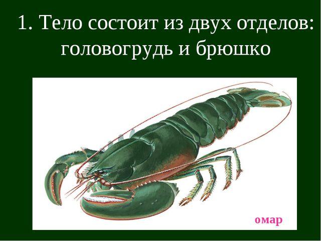 1. Тело состоит из двух отделов: головогрудь и брюшко омар