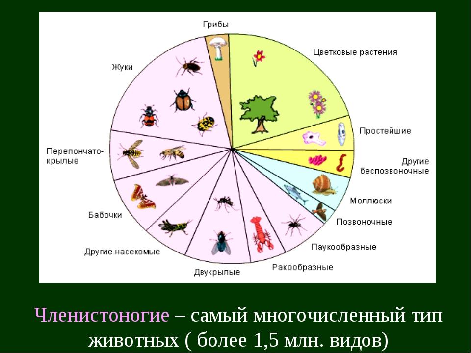 Членистоногие – самый многочисленный тип животных ( более 1,5 млн. видов)
