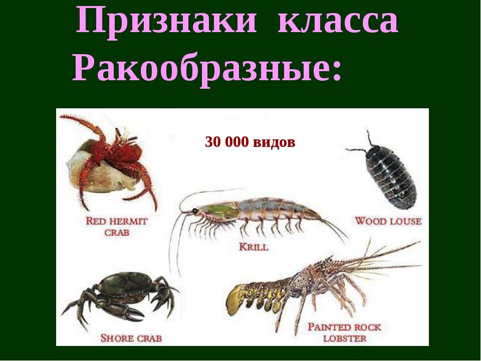 Признаки класса Ракообразные: 30 000 видов