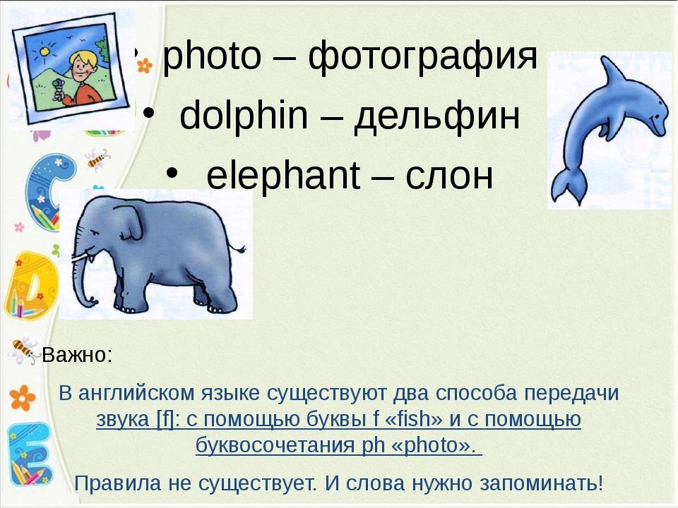 photo – фотография dolphin – дельфин elephant – слон Важно: В английском язык...