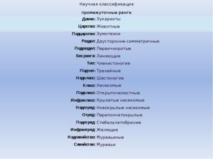 Научная классификация промежуточныеранги Домен: Эукариоты Царство: Животные