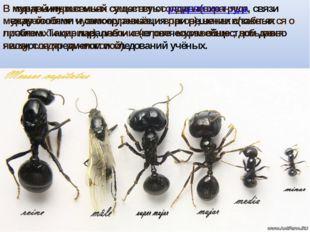 В муравьиных семьях существуют разделение труда, связи между особями и самоор