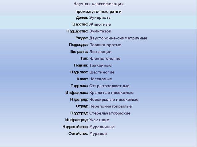 Научная классификация промежуточныеранги Домен: Эукариоты Царство: Животные...