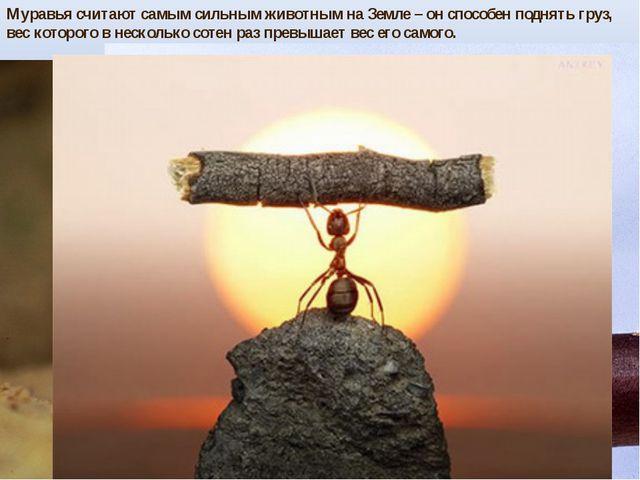 Муравья считают самым сильным животным на Земле – он способен поднять груз, в...